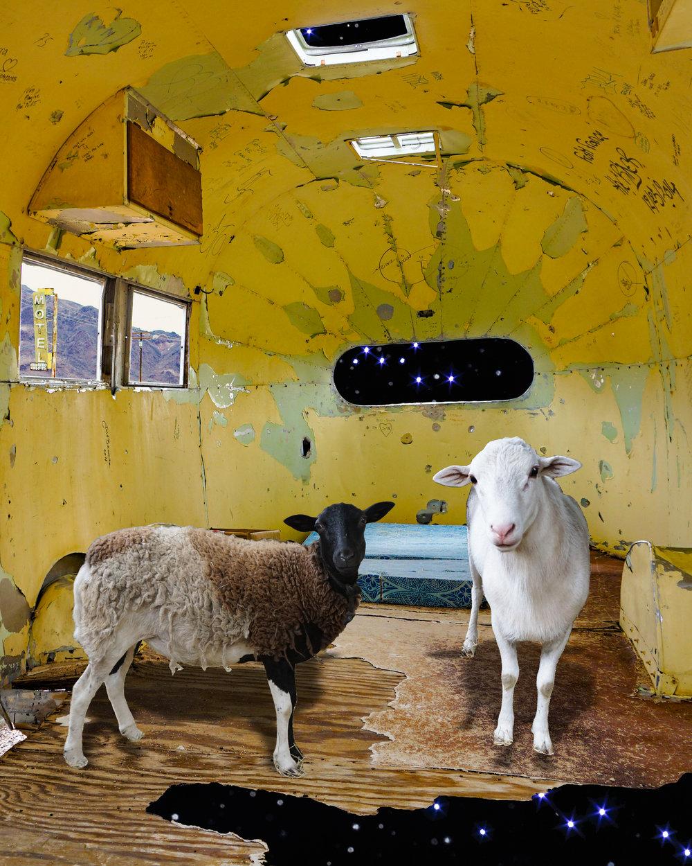 Sheep's Ship
