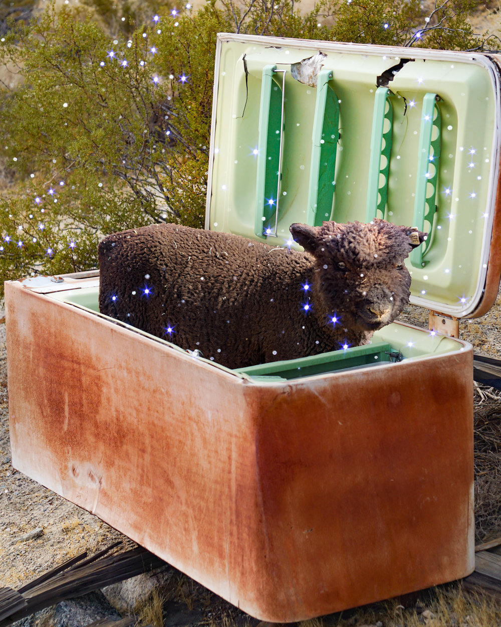 Sheep in an Ice Box