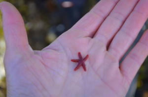 Bloodstar--tiny in my hand.JPG