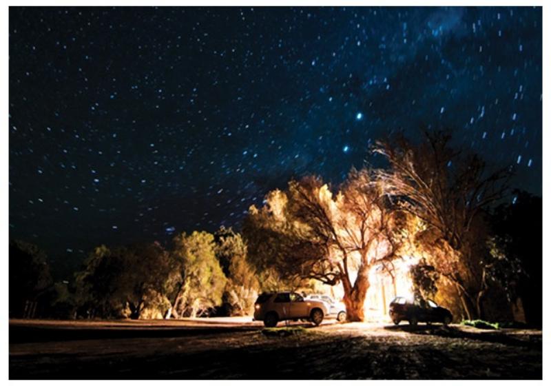 Tree under stars.jpg