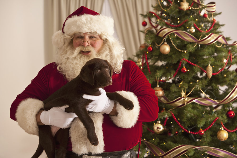 The Story of St. Nick: A True-Life Dead-Dog Kodiak Christmas Miracle ...
