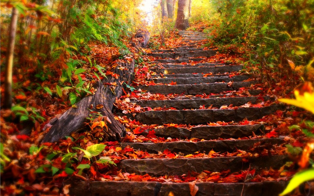 stone steps with autumn leaves.jpg