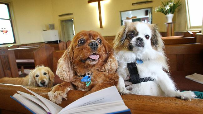 dogs in church.jpg