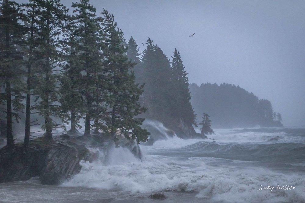 Kodiak Storm---Judy Heller photographer.jpg