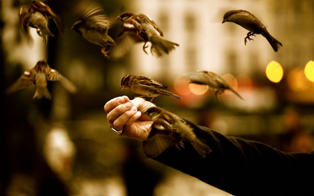 birds feeding from hands.jpg