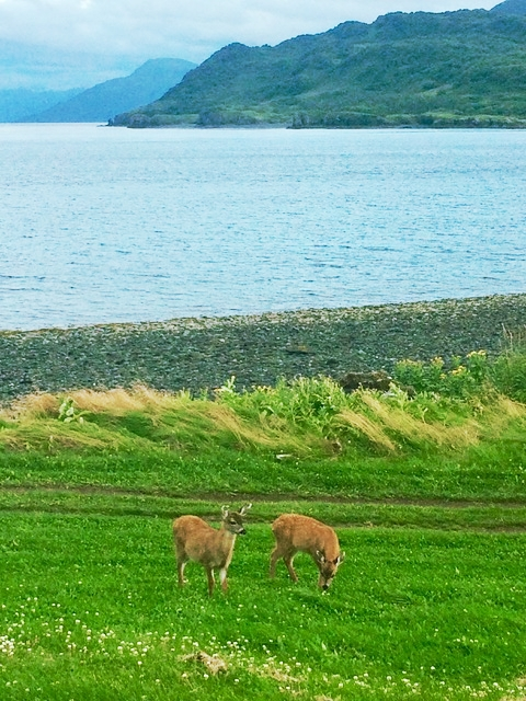 2 fawns on grass with Uyak mountains.jpeg
