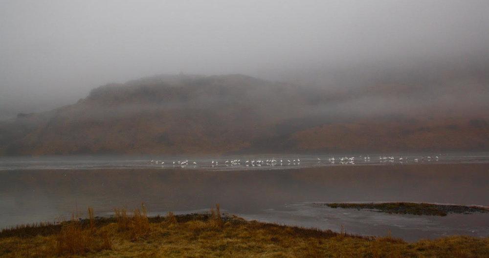 faraway swans and mountain.jpg