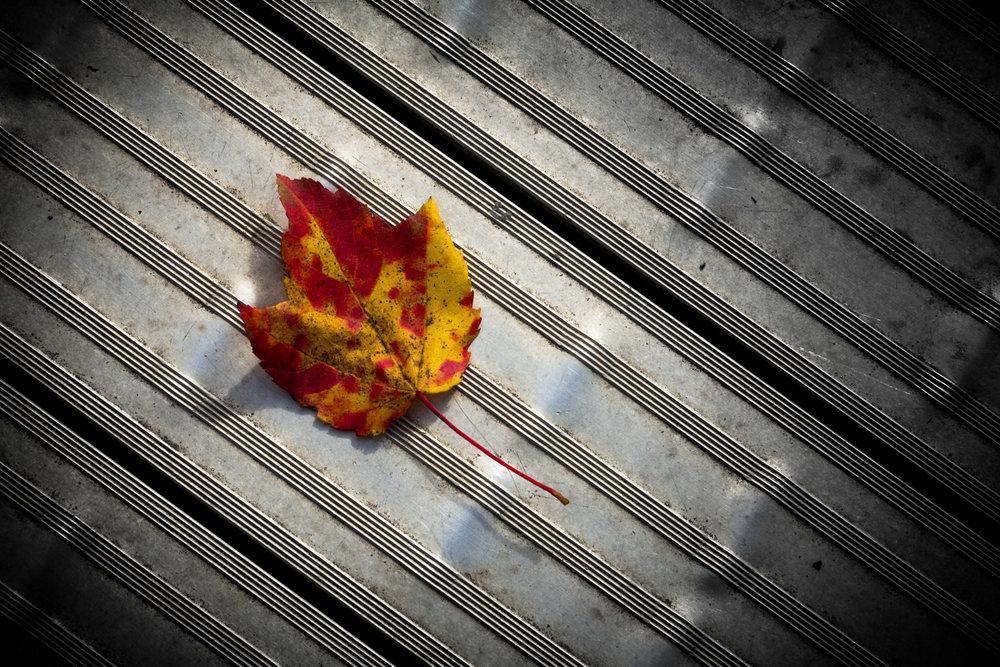 PhotoChallenge_Week2_November 04, 2017_web_04.jpg