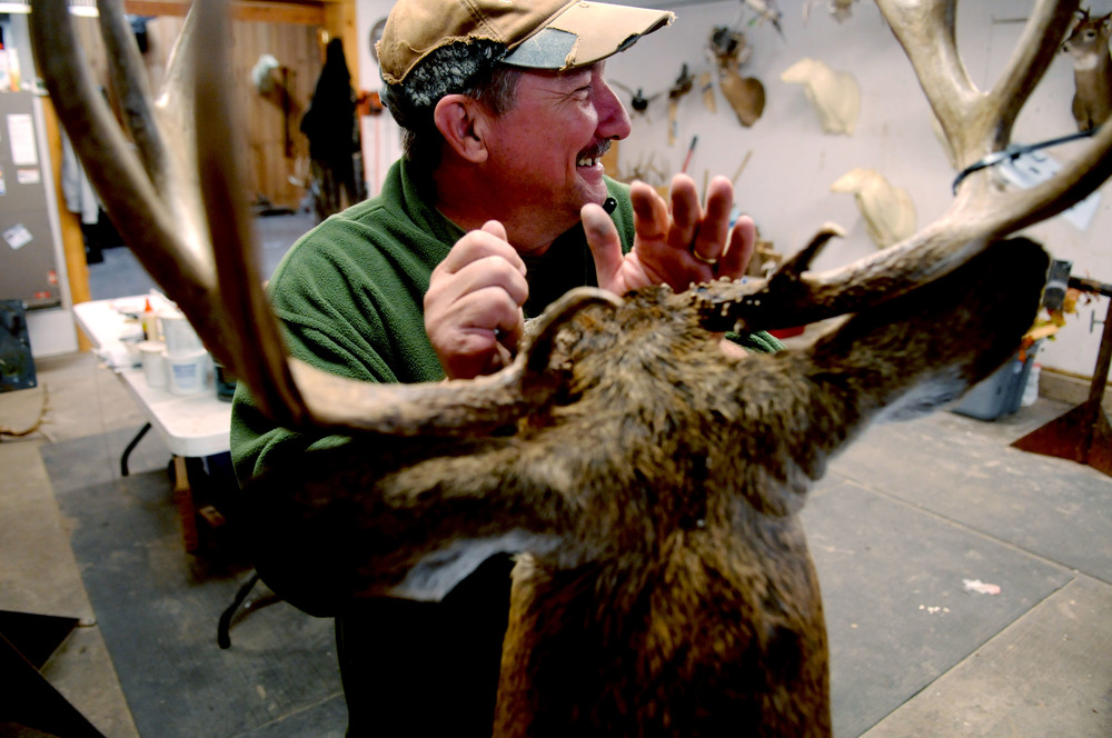 Jim McIntosh works on a deer mount in his Morgantown, Kentucky shop. Total time spent on mounting a deer averages around thirteen working hours. Since there is such a demand for his skill, a completed mount takes around six months to finish.