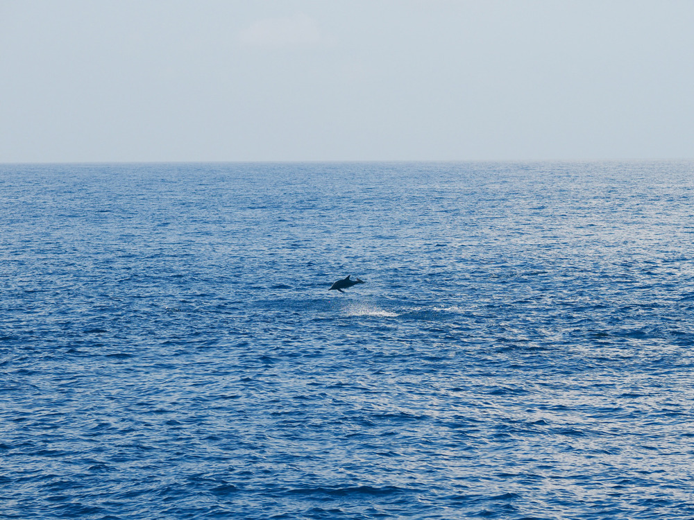During my Sri Lankan journey a dolphin wakes me up from my boat nap. Happy to trade my alarm clock for this any day.