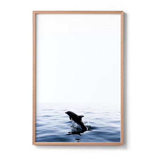 Dolphin — Ante Badzim