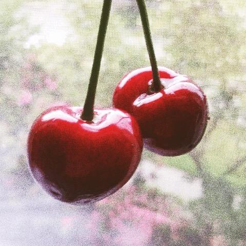 cherries_mathildegilling.jpg