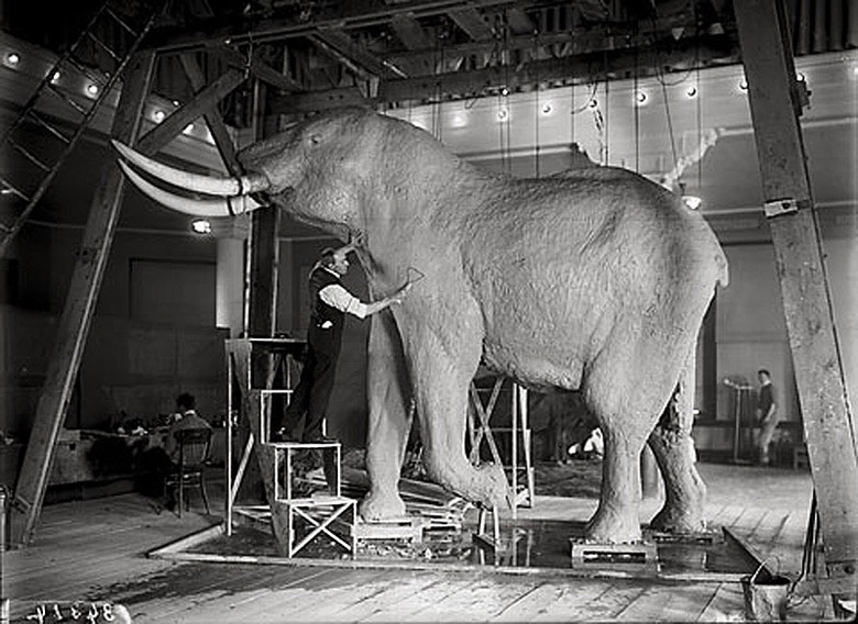 Figure 2.  Carl Akeley, shotcrete used in taxidermied elephant.