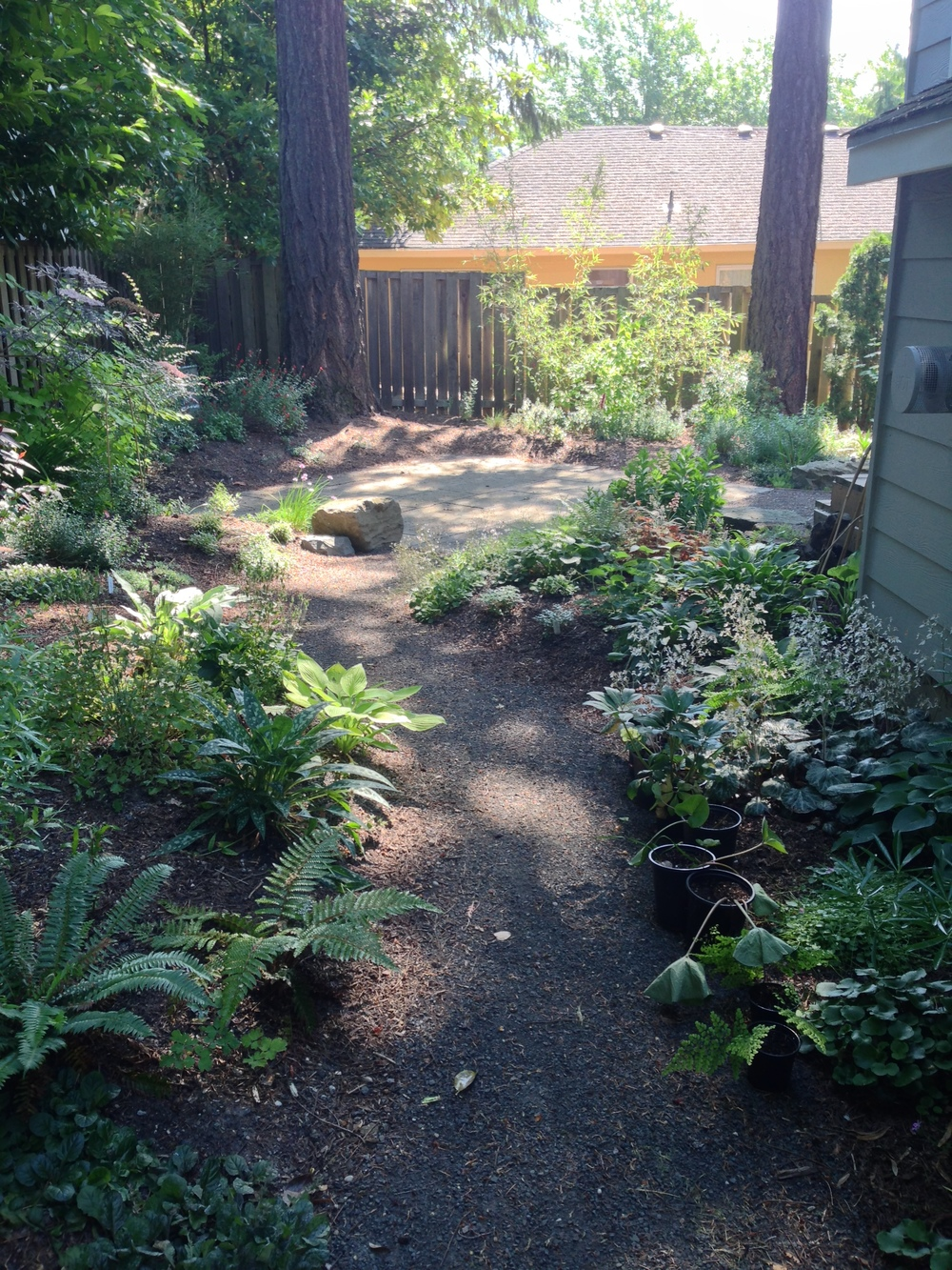 Myers t 2015-05-29 09.49.45h backlit path patio----.jpg