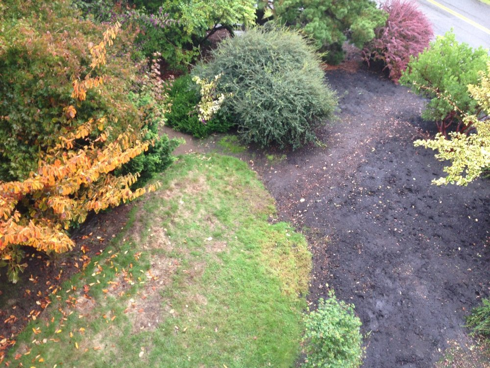 Fast forward.  After much clean-up and some new mulch down, here is the cleared and cleaned area as seen from above.  The largest barberry once stood in the dark-mulch area center right. (One barberry remains, upper right.)
