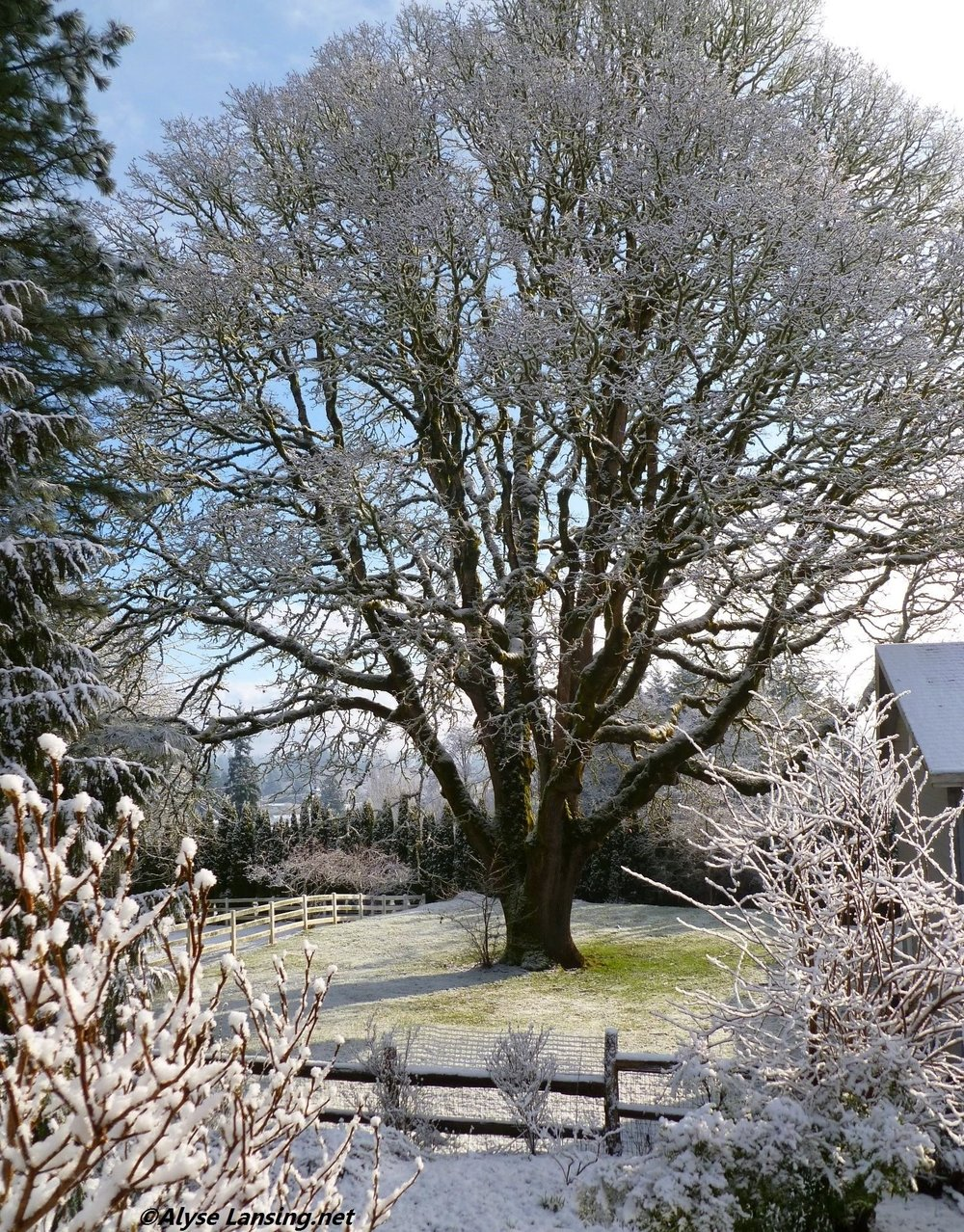 Feb 24, 2011. With a light dusting of snow.