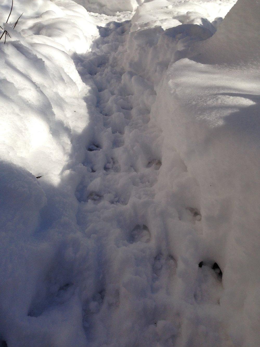 AlyseLansing_snowpath2