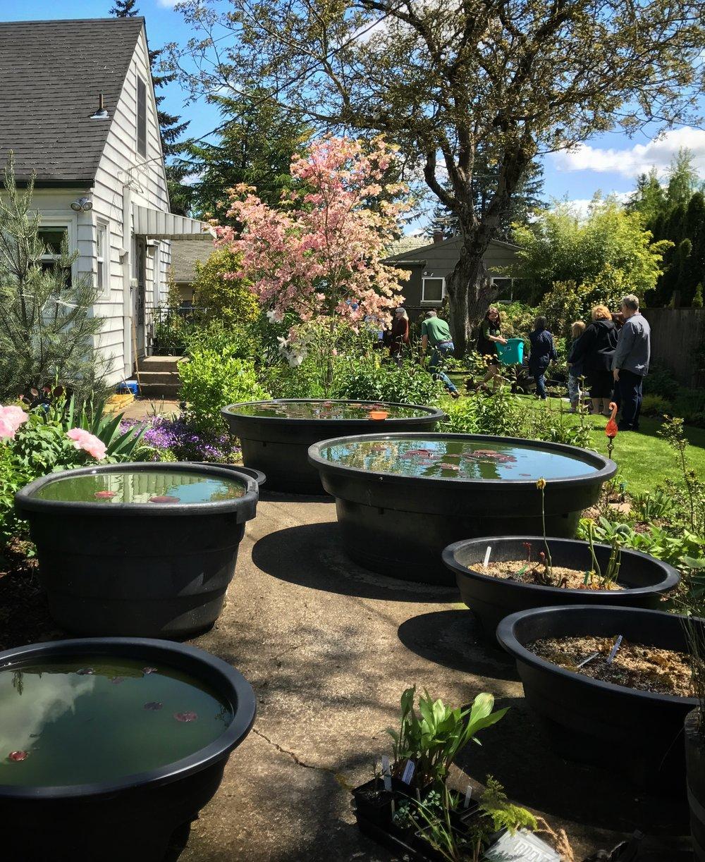 Matthew's garden