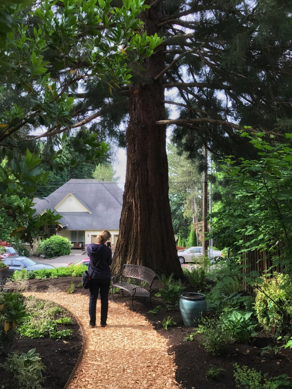 I could sit in the company of this Redwood all day.  (Wide-angle lens makes it look smaller than it is; does not do it justice.)  Heather admires it too.