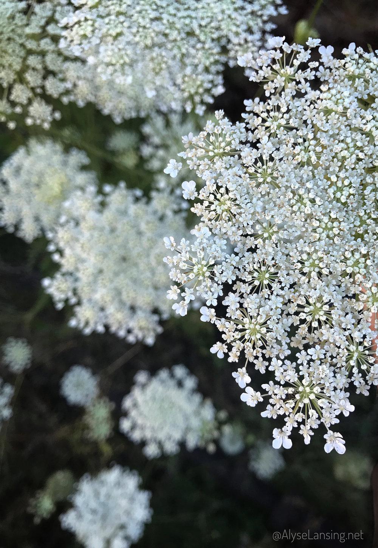 beautiful_weeds_AlyseLansing2017_10
