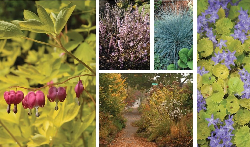 Images by Amy Campion, from  Gardening in the Pacific Northwest  (Timberpress, 2017)