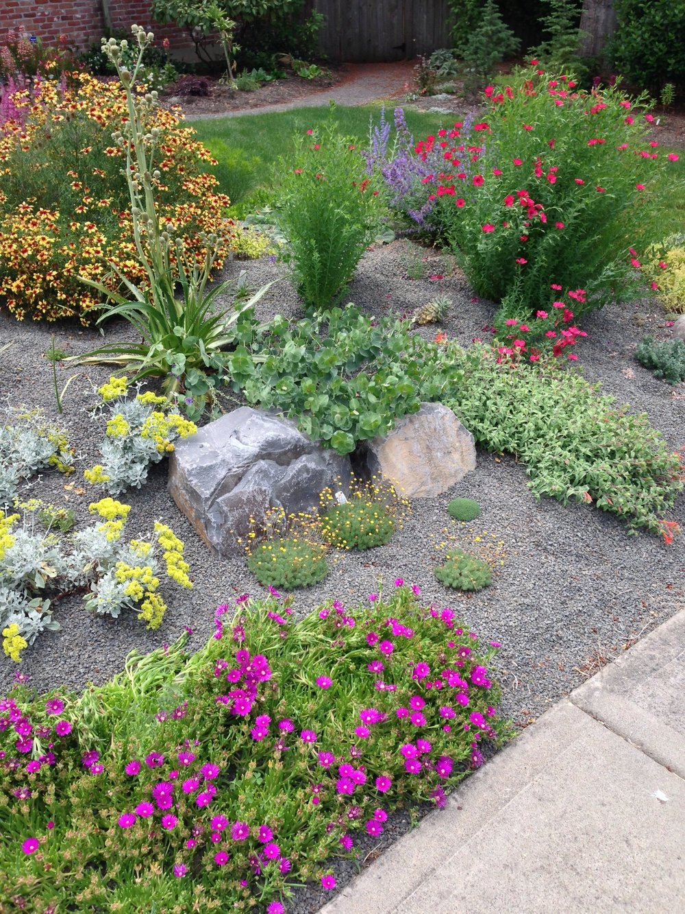 2016-07-05 13.33h Myers II fyd afters (lots Jacque plants), boulders dry bed gravel.jpg