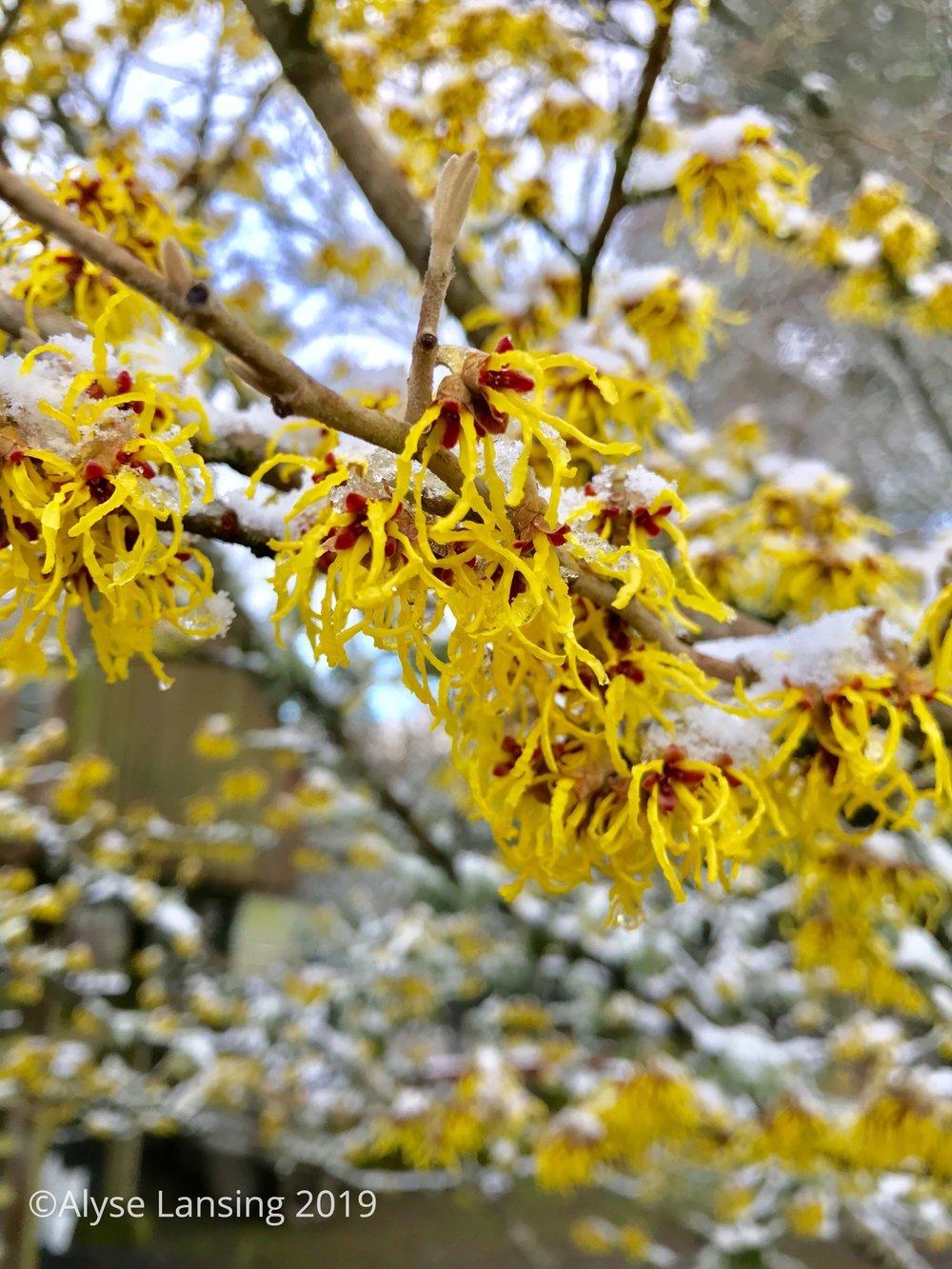 2019-02_Hamam_sun_snow_AlyseLansing_sig.jpg