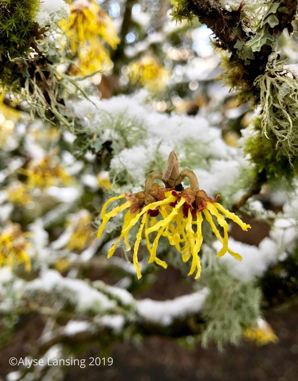 2019-02_Hamam_snow_AlyseLansing_sig.jpg
