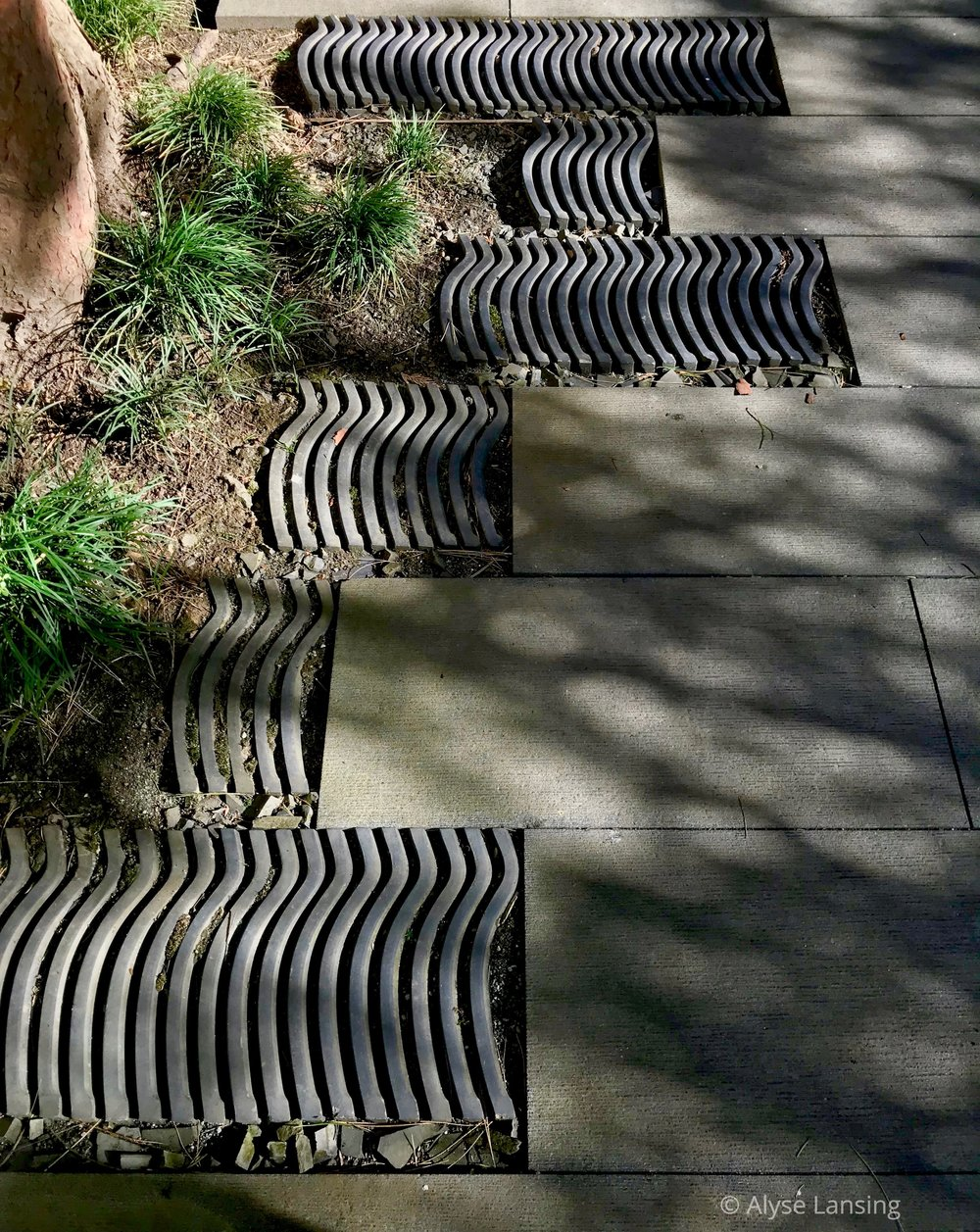 Paving detail at the foot of the pine