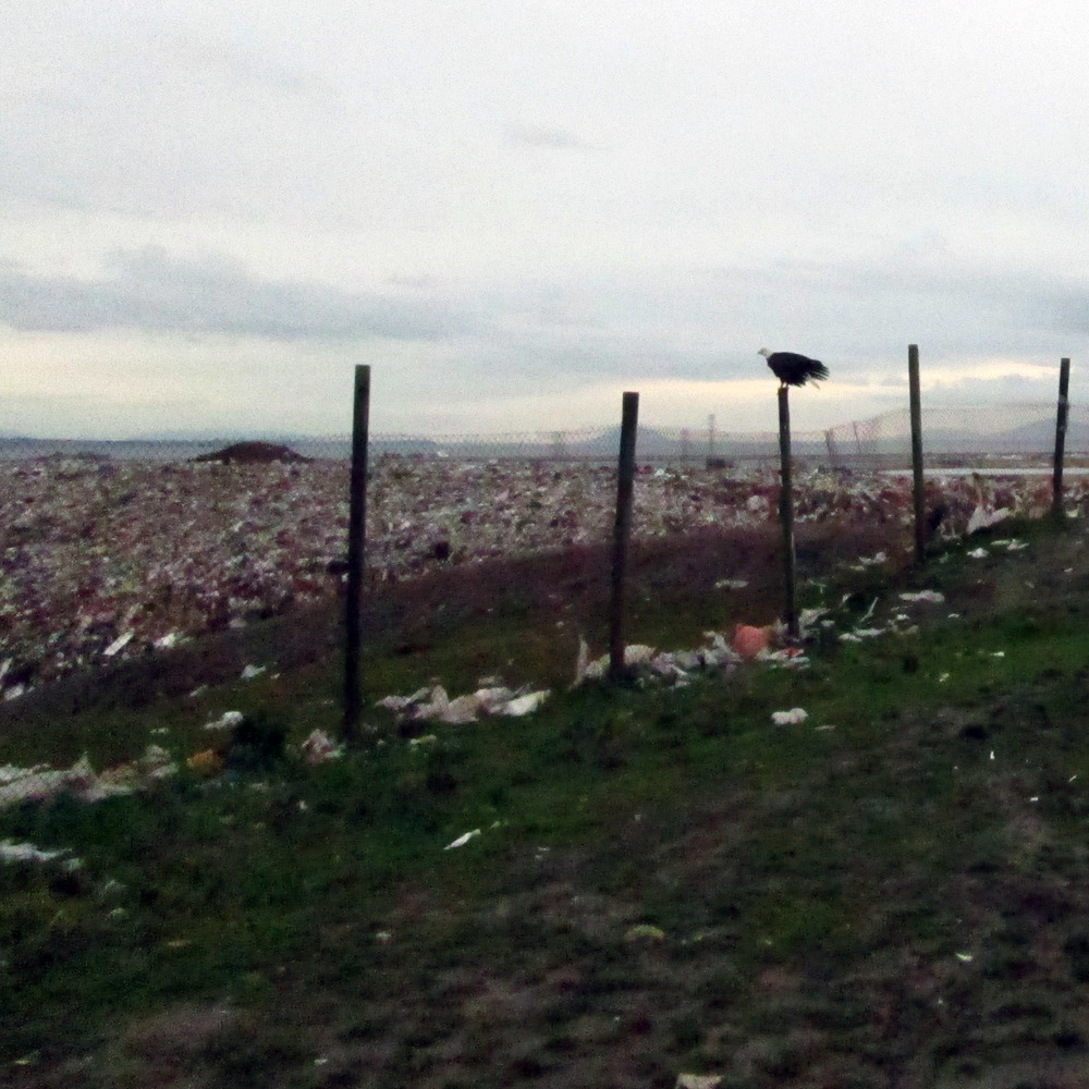 Standing at the top of the Vancouver Landfill
