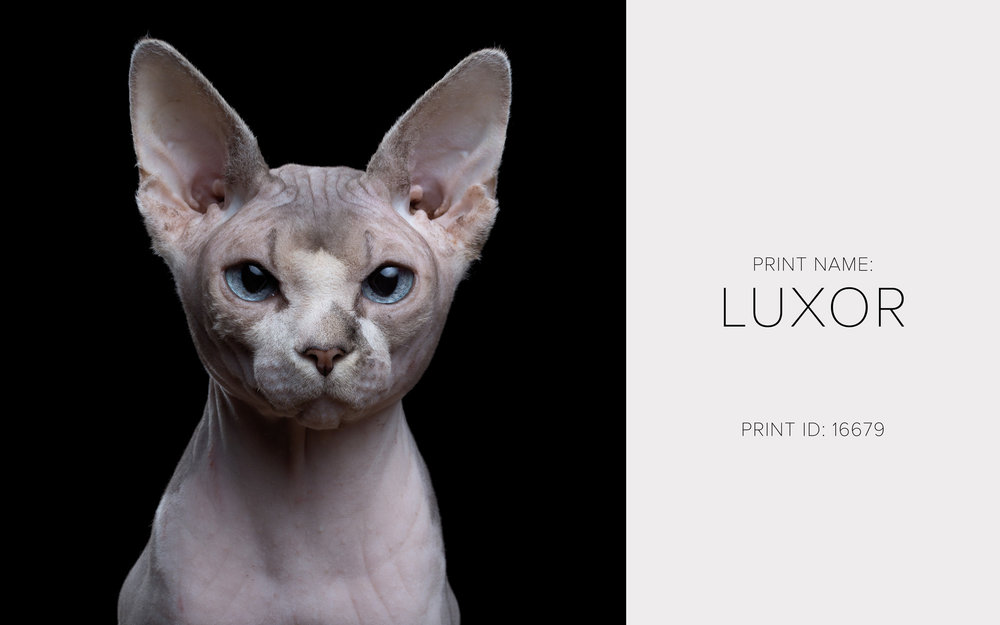 Luxor_Thumb.jpg