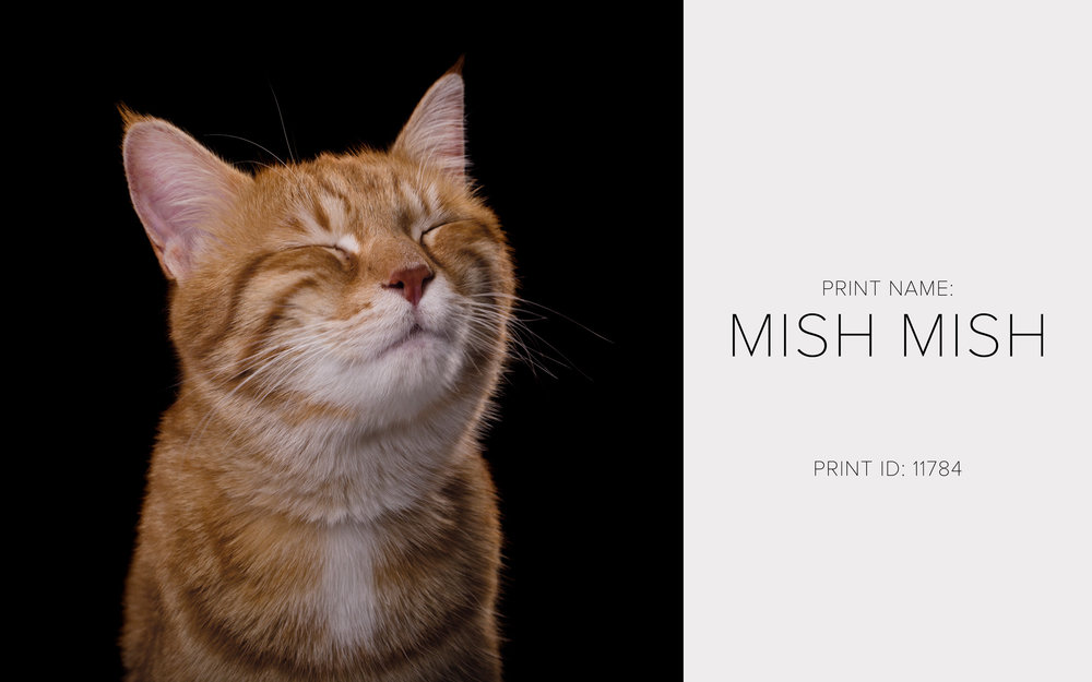 Mishmish_Thumb.jpg