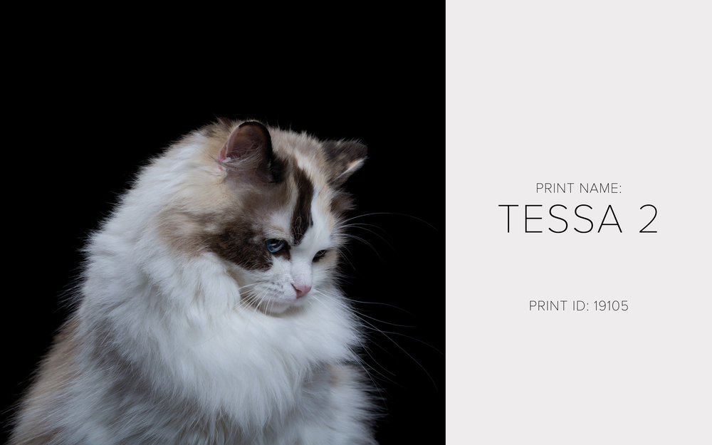 Tessa 2_Thumb.jpg