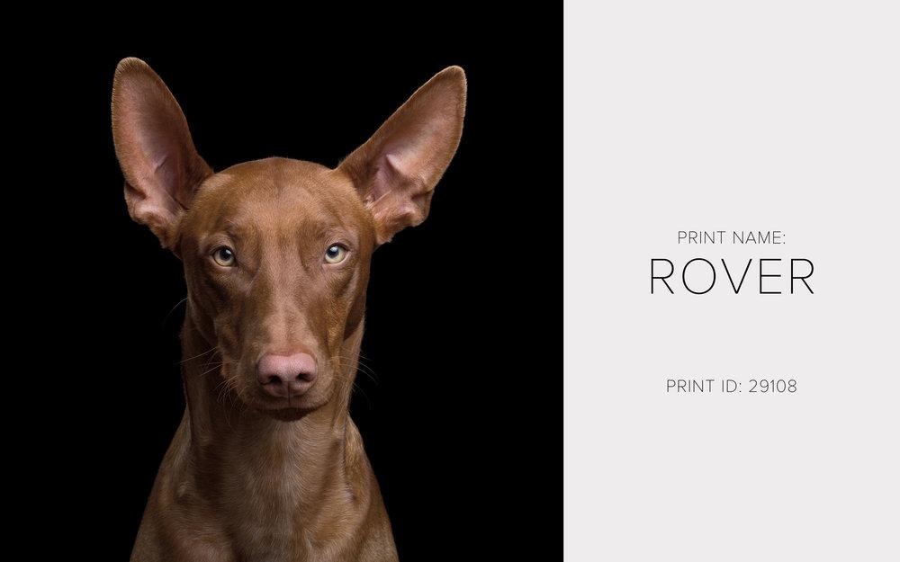 Rover_Thumb.jpg