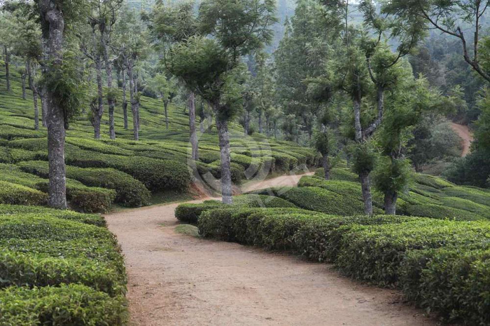 India12.jpg