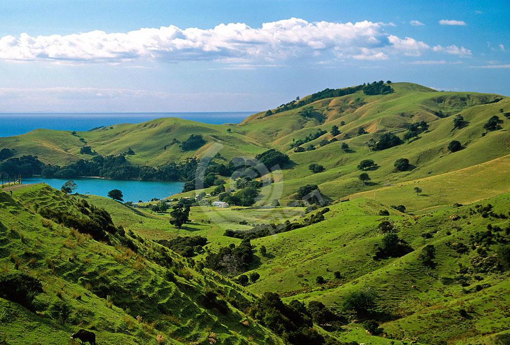 newzealand-4.jpg