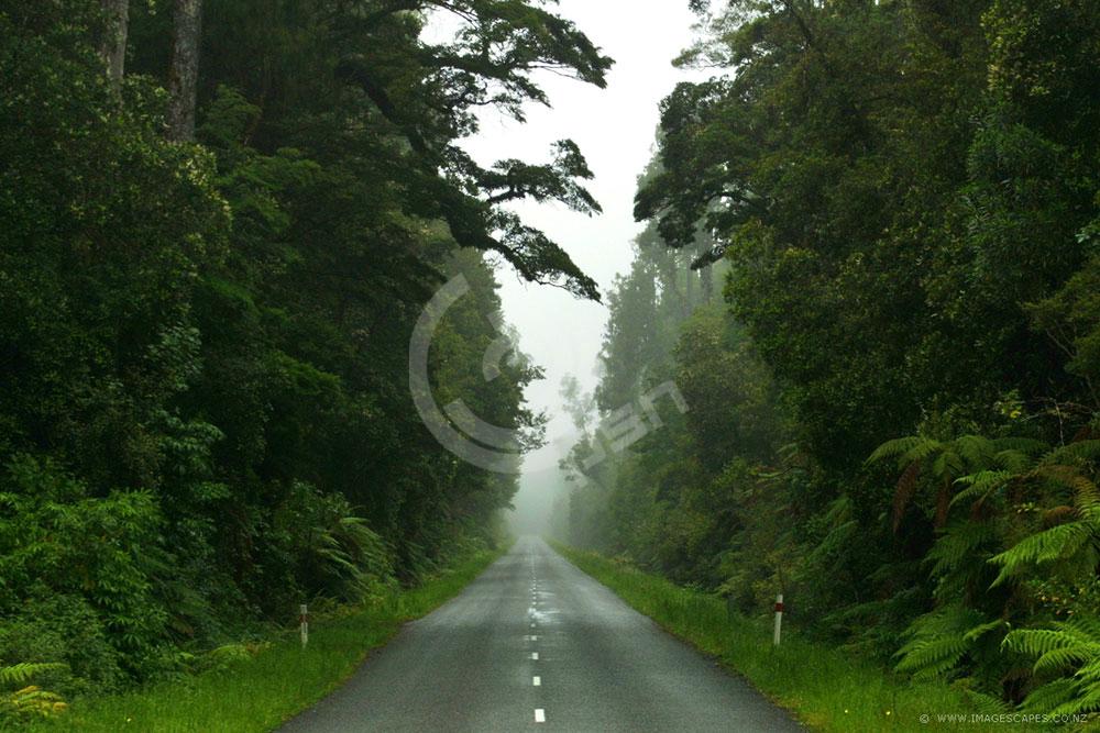 newzealand17.jpg