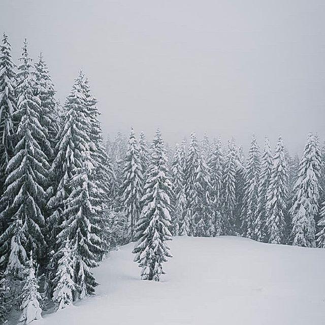 pra refrescar seu domingo no brasil ☃️ #winterwonderland #itsbetteroutside #alittlebeautyeveryday #austrianalps