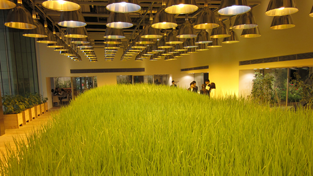 07-urban-farm1.jpg