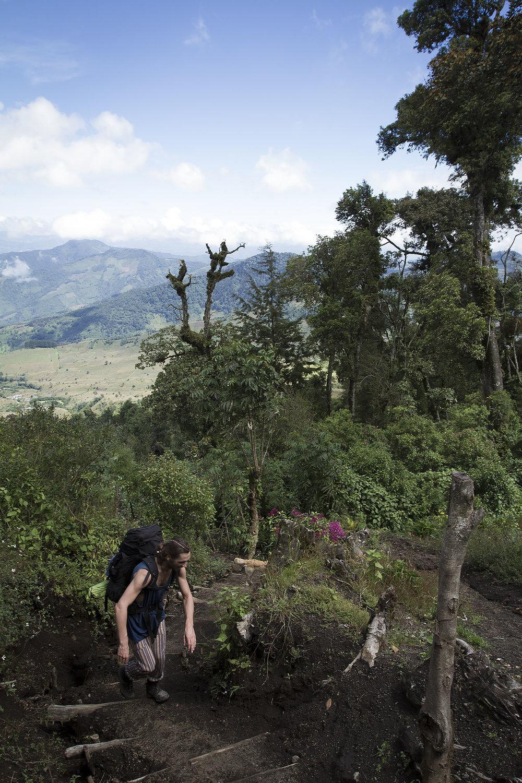 jungleclimb.jpg