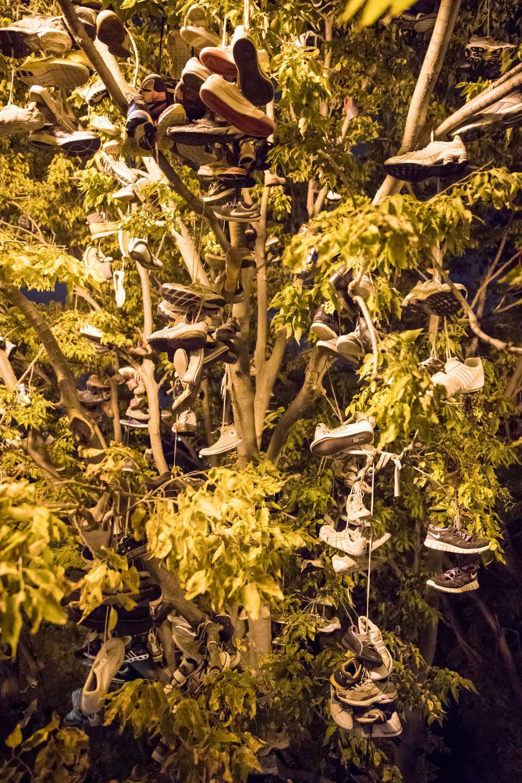 shoe tree (small).jpg