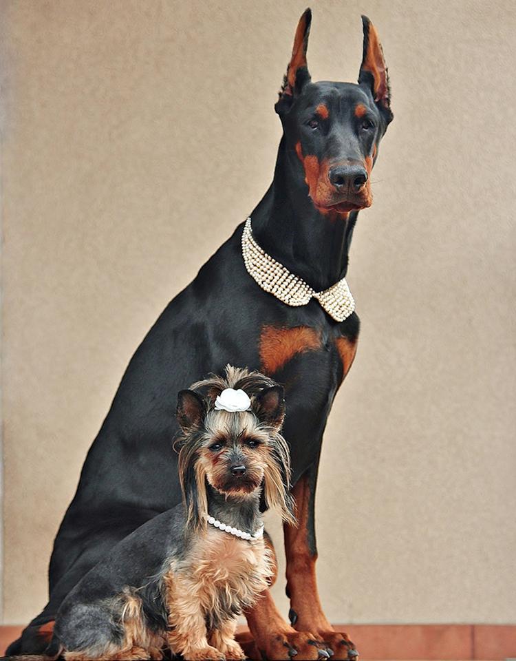 LADY DOG PERFUME