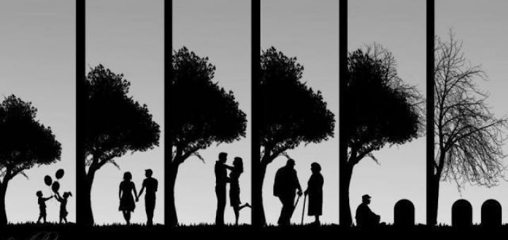 life-cycle-picture-720x340.jpg