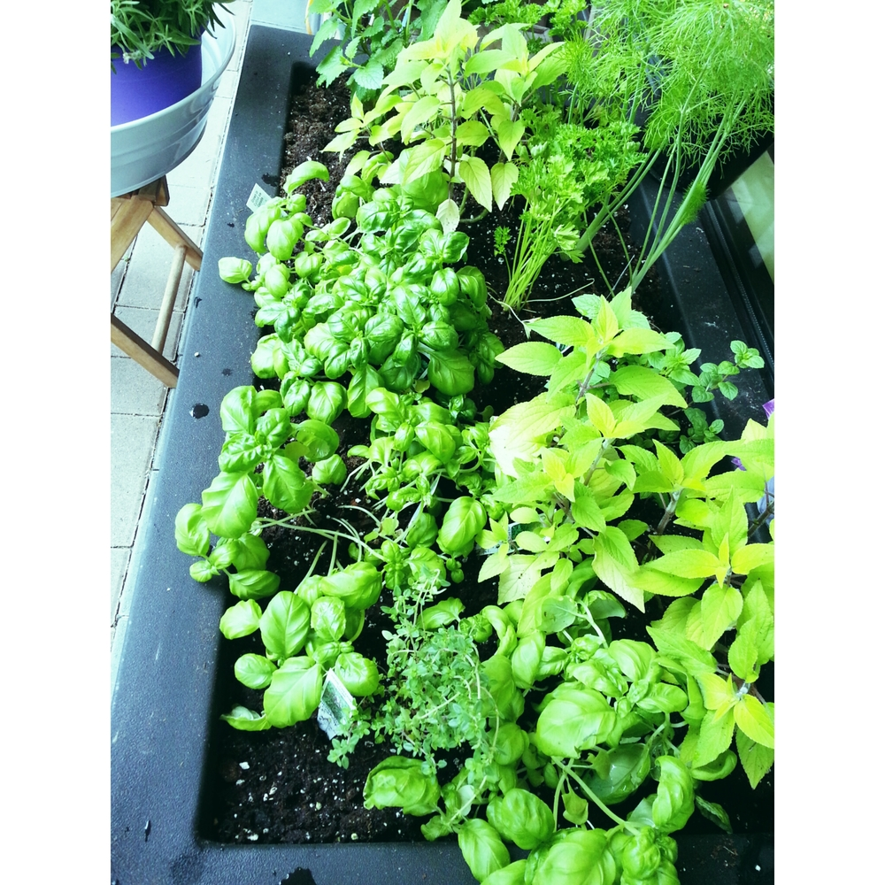 herbplanter.jpg