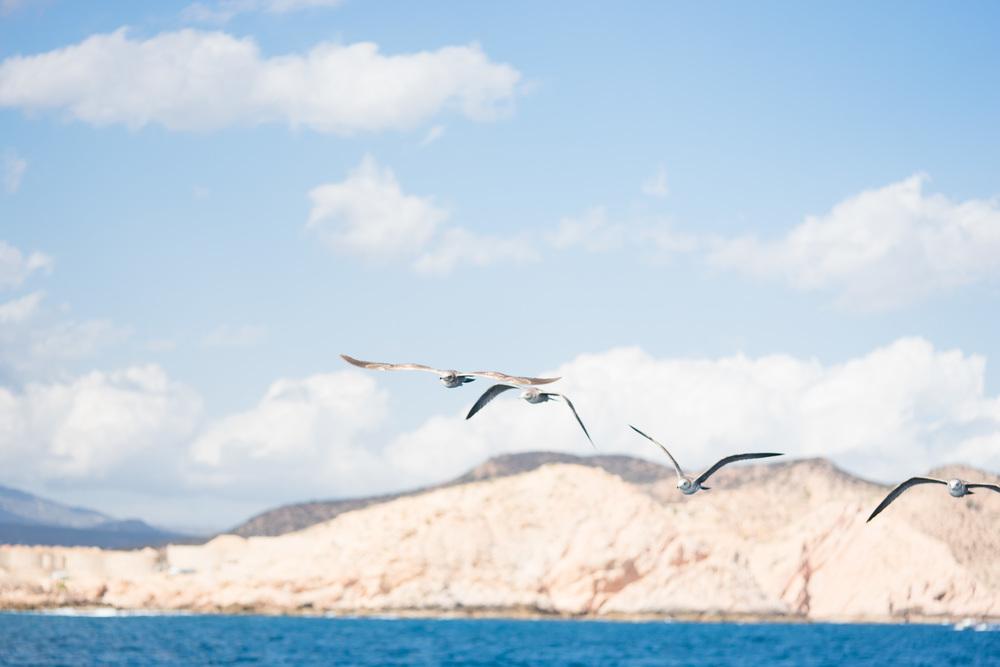 Cabo2016-263.jpg