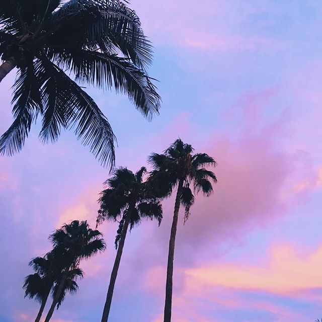 Tropical sunsets 💗💗💗