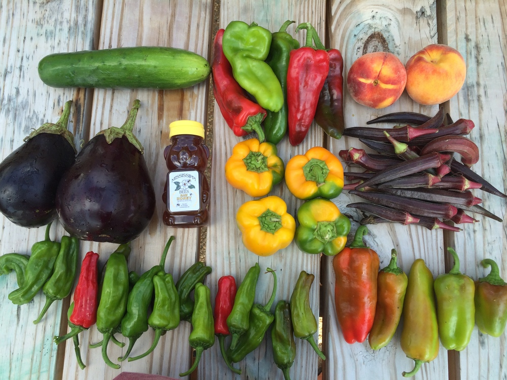 Top left to right: Cucumber, krimzon lee, peaches Middle left to right: Eggplant, honey, Bell Peppers, Okra Bottom left to right: Shishito and corno di toro