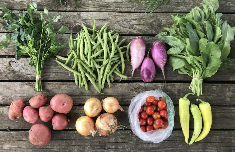 Top Row: Parsley, Green Beans, Daikon Radishes, and Sorrel  Bottom Row: Potatoes, Onions, Cherry Tomatoes, and Banana Peppers