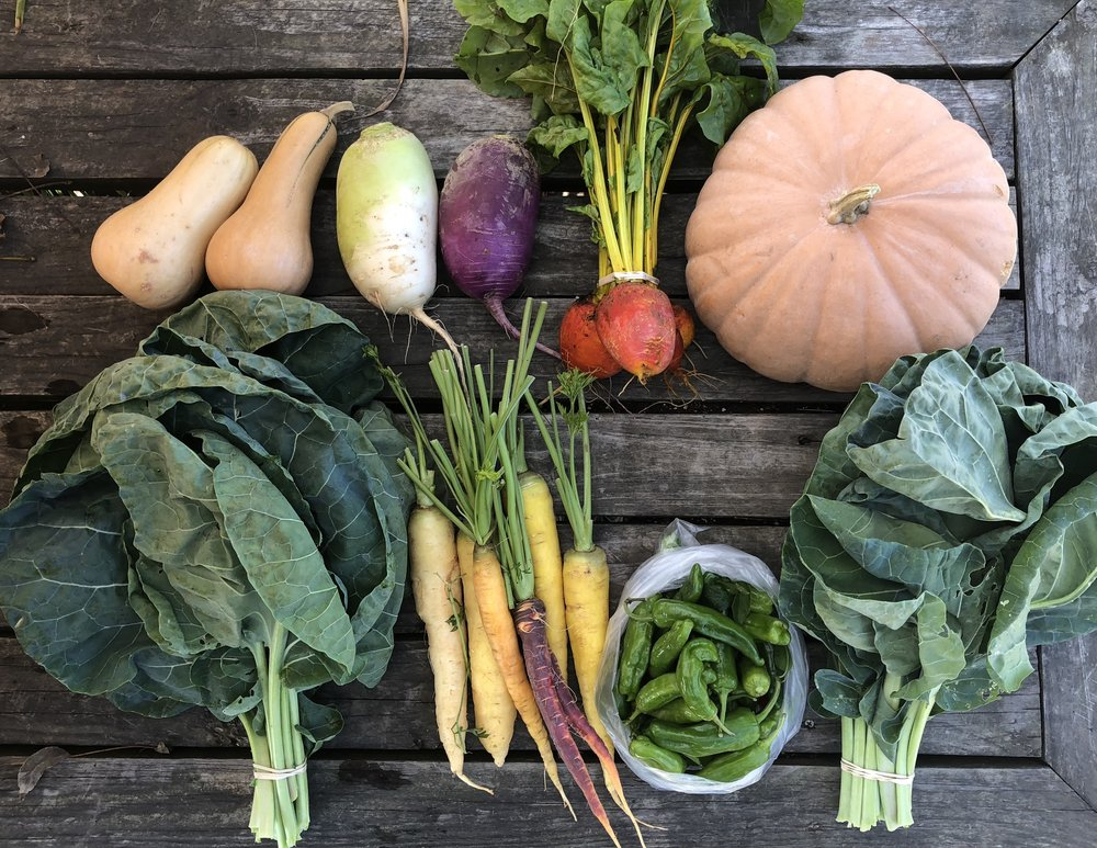 Top Row: Butternut Squash, Daikon Radish, Beets, Long Island Cheese Squash, or North Georgia Candy Roaster  Bottom Row: Collards, Carrots, Shishito Peppers, and Collards