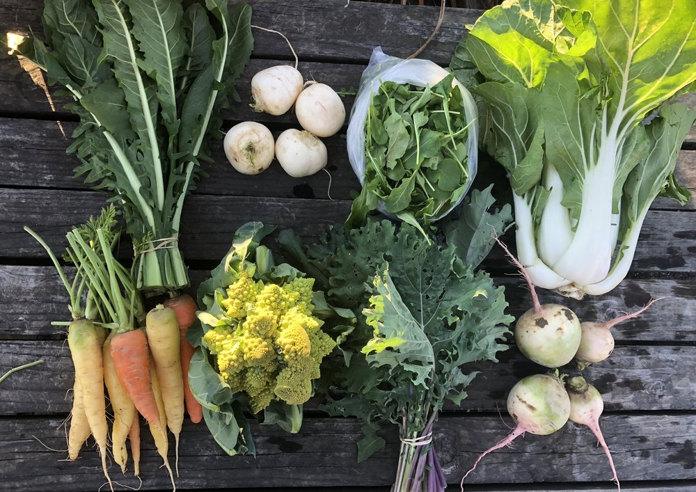 Top Row: Dandelion Greens, Hakurei Turnips, Arugula, and Bok Choy  Bottom Row: Carrots, Cauliflower (Romanesco), Red Russian Kale, and Watermelon Radishes